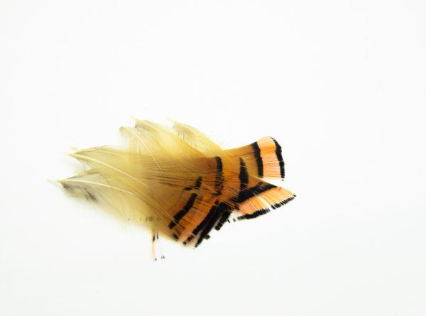 Golden Pheasant Tippets Medium