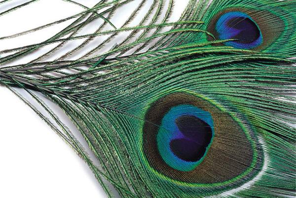 Peacock Eyes 2pk